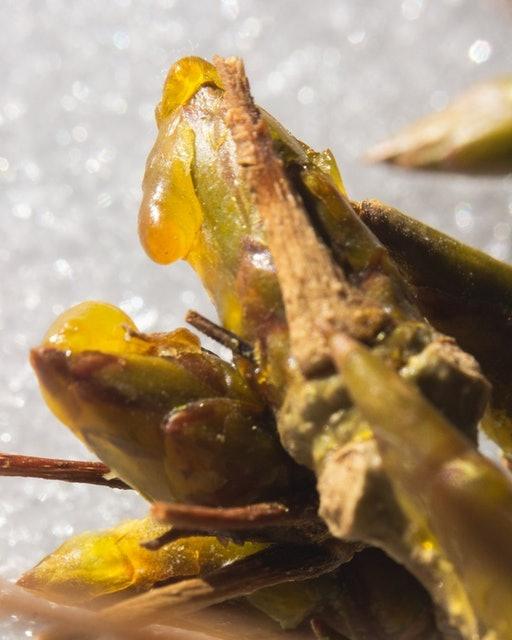 Fam Botanicals Oils 1