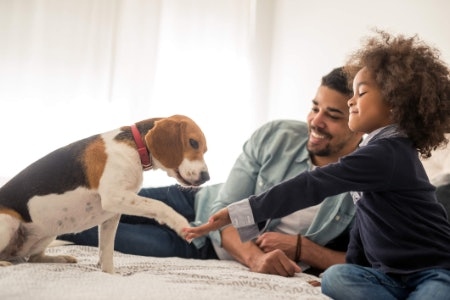 General Books Are Ideal for Family Pet Owners