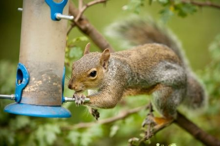 Consider the Placement of Your Feeder to Prevent Squirrel Attacks