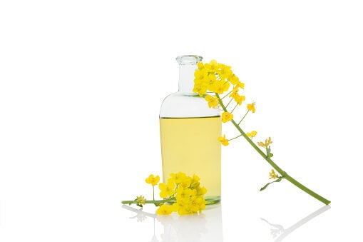 Rapeseed Is Locally Sourced, Creating a Lower Carbon Footprint