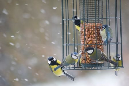 Caged Bird Feeders Guard Against Large Intruders