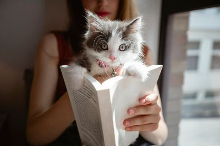 Cat-Themed Fiction and Biographies Offer an Exciting Narrative