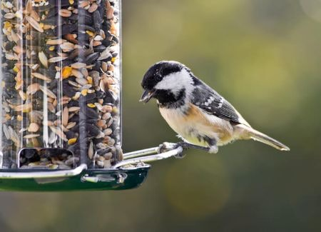Stop Squirrels With Weight Sensitive, Spring-Loaded Perches