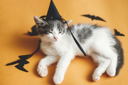 Choose Fun, Colourful Decorations For Kids' Halloween Parties