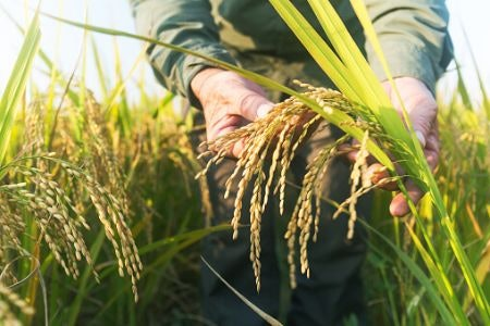 You Can't Beat Rice Grown in the USA for Affordability
