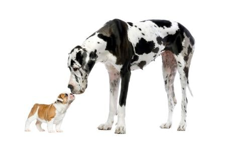 Size Matters: Shorter Lengths Suit Smaller Dogs, Longer Are Best for Larger Pooches