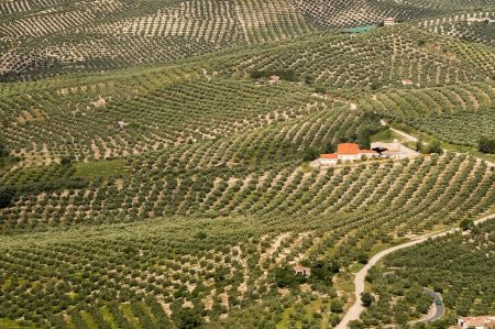 Choose Oils That Include Details About the Region, and Are Single Estate or Estate Nurtured