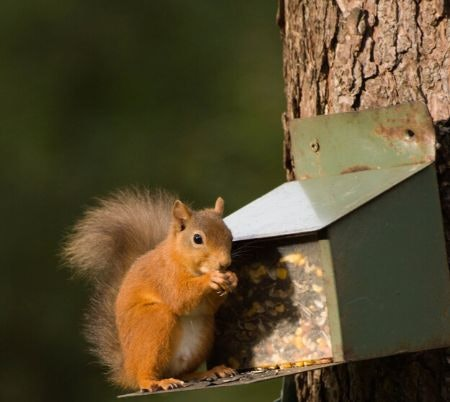 Distract Them With a Squirrel Feeder