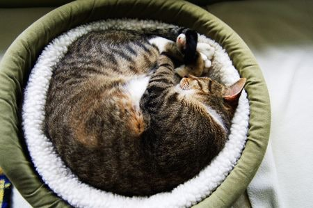 Donut Beds Are Comfy for Cats Who Like to Curl Up