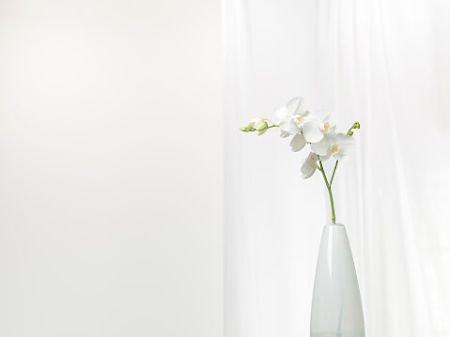 Bottleneck or Column Vases Suit Longer Stems