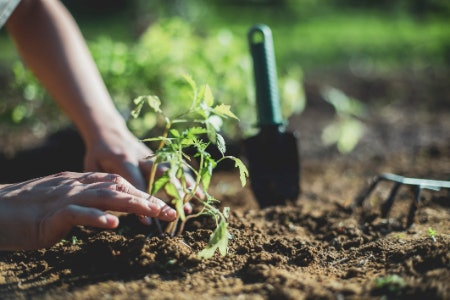More Essential Tools for Gardeners