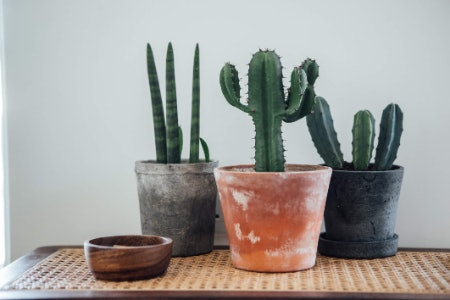 Rugs, Furniture, Plants and Vases and Other Gifts for the Home Are Great Options for a Bigger Budget