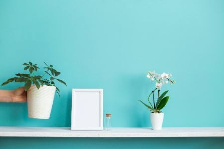 Homeware Boxes Are a Fun Way to Spruce up the House or Apartment