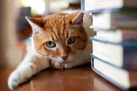 Learn About Cats and Their Behaviour With a Non-Fiction Book