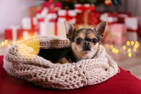 For the Pampered Pooch, Choose Grooming Treats or a Cosy New Bed