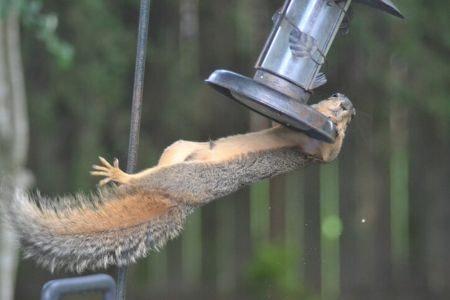 Spinning Feeders Prevent Squirrels from Hanging On