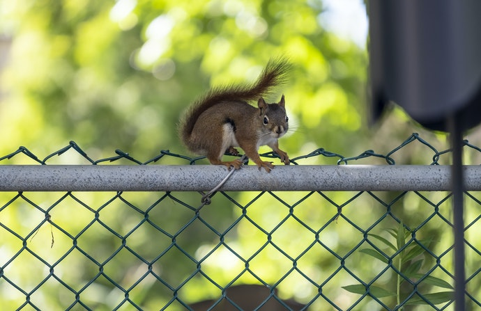 Squirrel Baffles Prevent Jumping and Climbing on to Bird Feeders