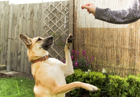 More Essentials to Help Train Your Dog