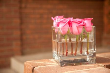 Cube Vases Are Ideal for Plants With Shorter Stems