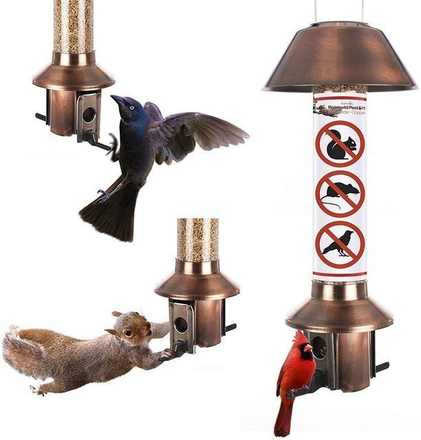Roamwild Squirrel Proof Wild Bird Feeder 1