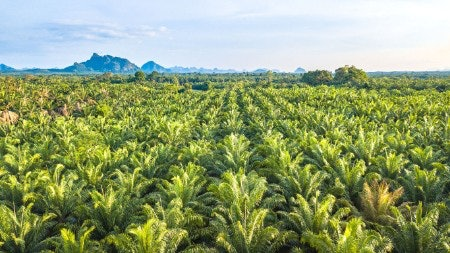 Skip Palm Oil and Do Your Bit for the Environment